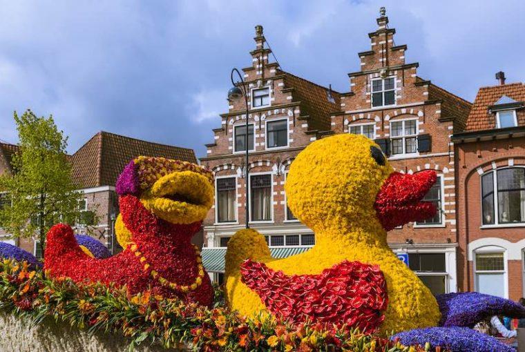 fiori Haarlem